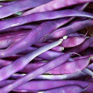 fasola-purple-teepee